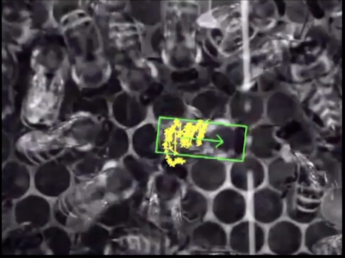 A camera recording of bees clustered together.